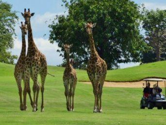 Sud Africa Golf
